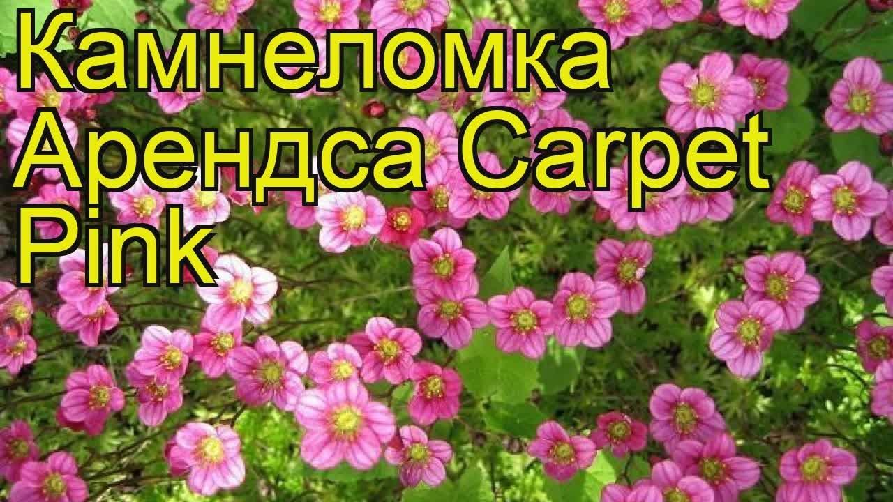 Flowerfell】 Secret Garden [RUS COVER] - YouTube