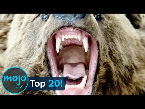 Top 20 Most Dangerous Animals in the World