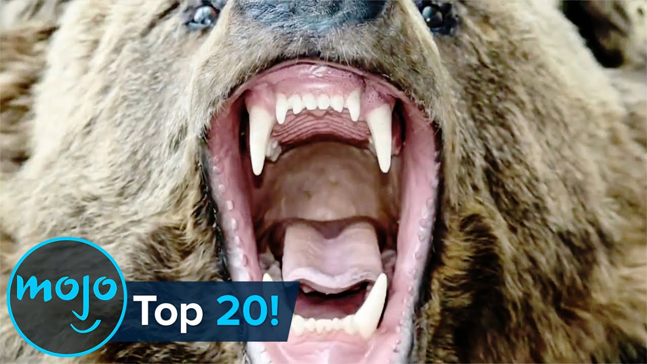 Download Top 20 Most Dangerous Animals in the World