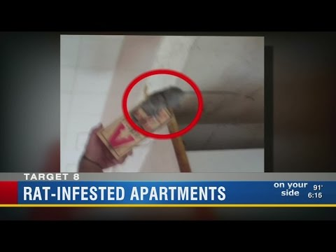 Target 8: Report about veteran living with rats prompts action by Tampa Housing Authority