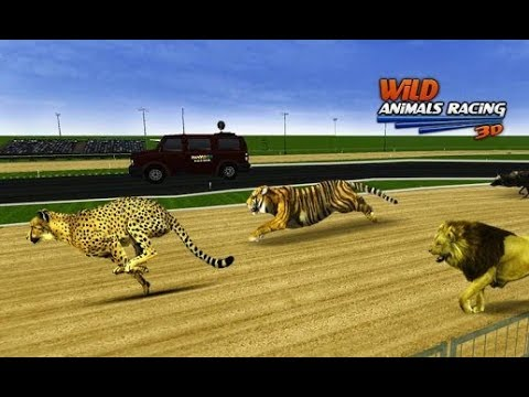 Wild Animals Racing 3D - Android Gameplay #1 | DishoomGameplay