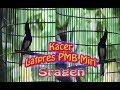 Kacer Istimewa Joget Ngobra Latpres Pmb Miri Sragen  Mp3 - Mp4 Download