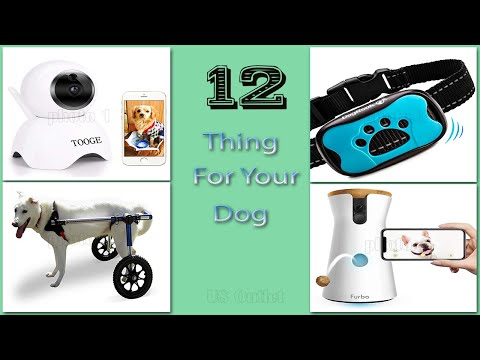 12-things-your-dog-wants-from-amazon