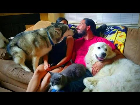 Funny Animals 🐶😆 Jealous Dogs Want Attention From Their Owners (Part 1) [Epic Life]