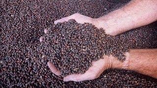 Масло черного тмина: полезные свойства ~ масло тмина, черный тмин, лечение тмином