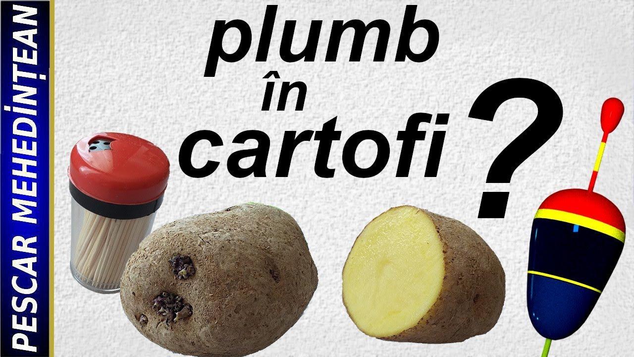 cartofi varicose turnare)