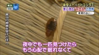 新型スーパートコジラミ現る【第1弾】