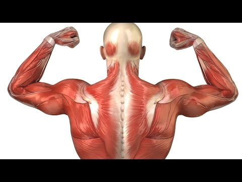 Сколько восстанавливаются мышцы