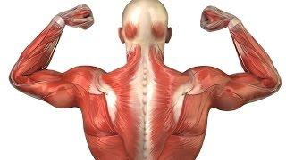 видео Можно ли Тренироваться, если Мышцы ещё Болят После Прошлой Тренировки???