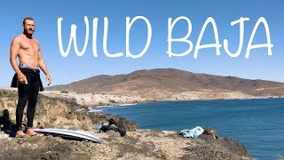 van-life-mexico-wild-dogs-and-surfing-secret-waves-in-wild-baja-adventure-travel-series-ep-7