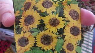Разговор по душам о цветах , семенах и жизни!