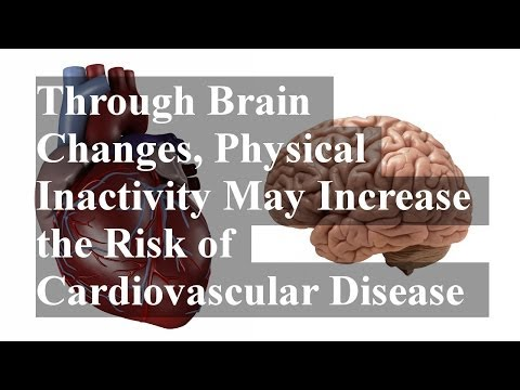 Through Brain Changes, Physical Inactivity May Increase the Risk of Cardiovascular Disease