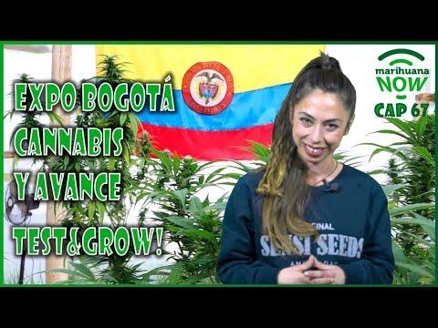 REPORTAJE ESPECIAL EXPO BOGOTÁ CANNABIS. La MARIHUANA LEGAL en COLOMBIA. Marihuana NOW 67