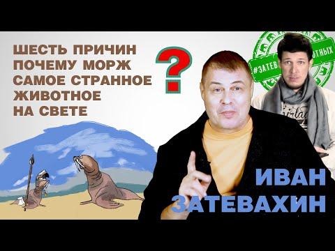 07 || Шесть причин почему морж самое странное животное на свете || Затевахин о Животных
