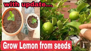 How to grow a lemon tree from seeds, grow Lemon tree from seeds with update