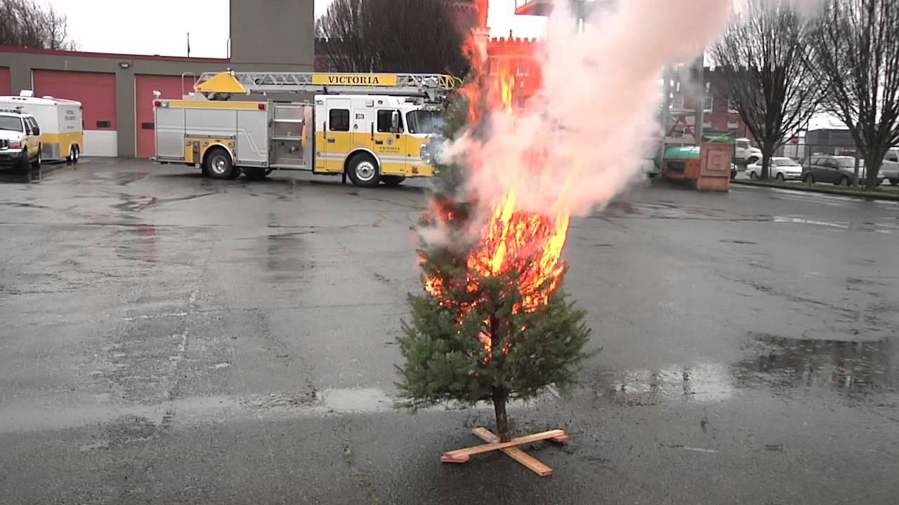 Burning Christmas Tree.Christmas Tree Burn Test Dry Vs Hydrated