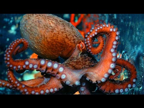Monster Brain: The Mysterious Lives Of Octopuses - Octopus Author