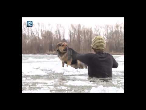 О!2014/2. Собака пыталась покинуть Омск на льдине