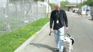 Barc Houston   Don's Pet Adoption Story