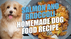 Salmon and Broccoli Homemade Dog Food Recipe