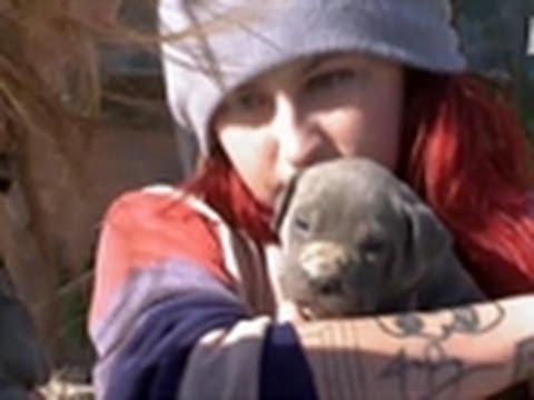 Pit Bull Puppy Rescue Pit Bulls Parolees Youtube