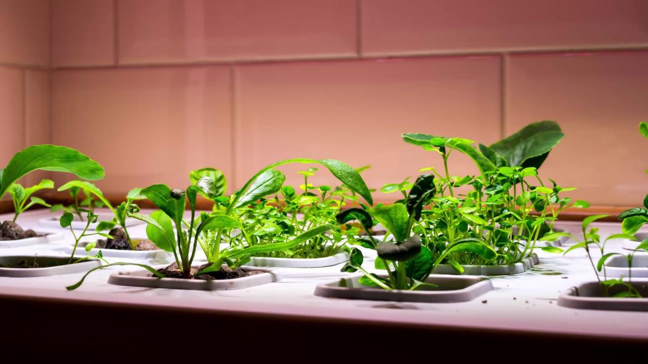 time lapse of ikea vxer indoor garden - Ikea Indoor Garden