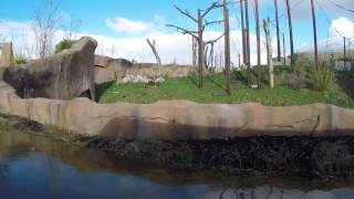 Chester zoo Feb 2017
