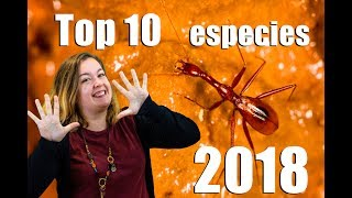TOP 10 Especies descubiertas de 2018 | Hidden Nature