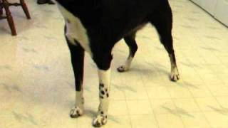 Cover Your Eyes Dog Trick Via Clicker Training And Capturing