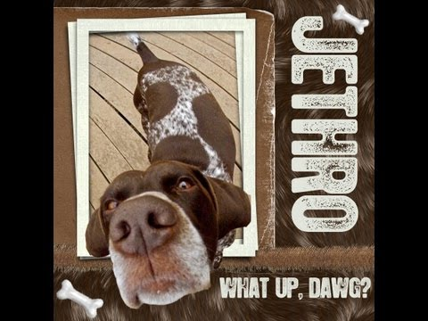 Jethro The Crazy German Shorthaired Pointer