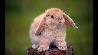 30 ноября - День домашних животных!