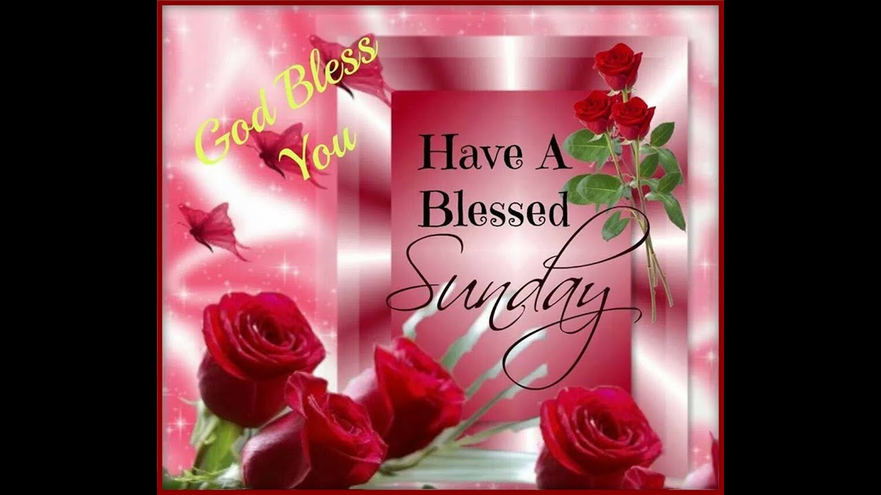 Happy Sunday Greetings/Quotes/Sms/Wishes/Saying/E Card/Wallpapers/ Whatsapp  Video   YouTube