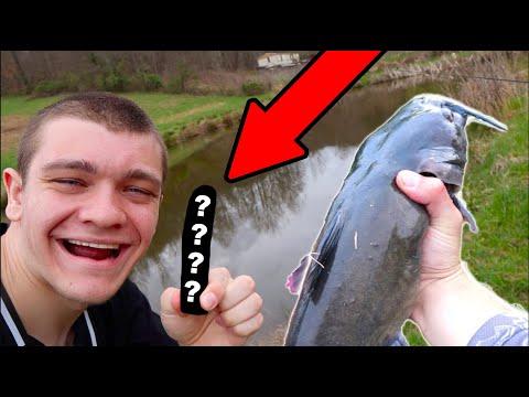 Catfishing With A HOTDOG!!!