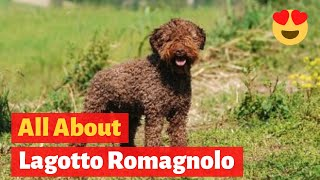 Everything about Lagotto Romagnolo Dog Breed  Health, Behavior, Size,  Temperament, and Training