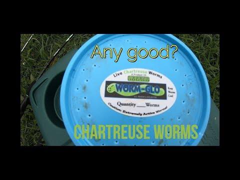 Worm - Glow... Chartreuse Nightcrawlers