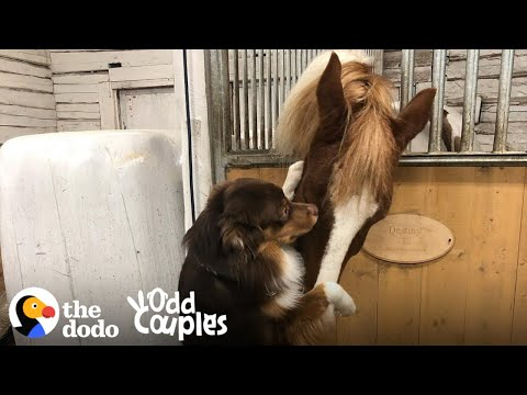 This Dog Can't Stop Hugging His Horse BFF | The Dodo Odd Couples