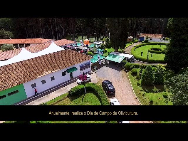 Dia de Campo de Olivicultura 2019