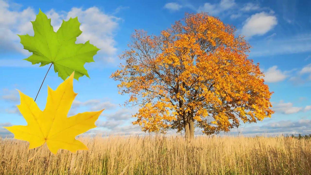 Autumn Season Essay
