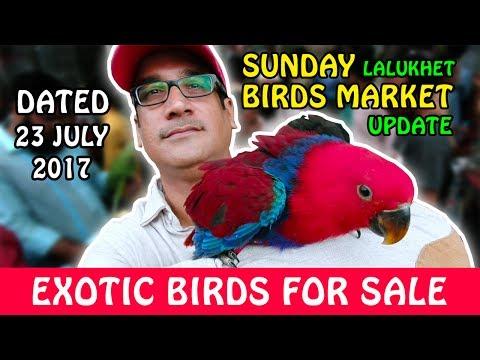 SUNDAY Bird Market Karachi update | Exotic Birds for SALE | Video in URDU/HINDI
