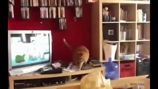 Кот и книжный шкаф!(, 2015-04-16T05:42:26.000Z)