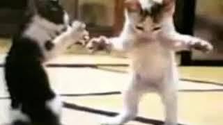 رقص القطط مضحك جدا screenshot 1