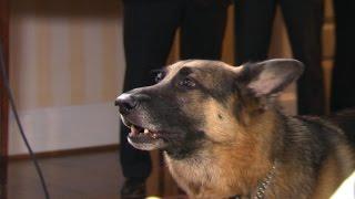 "Vp Biden Shows His Dog Is ""a Talker"""
