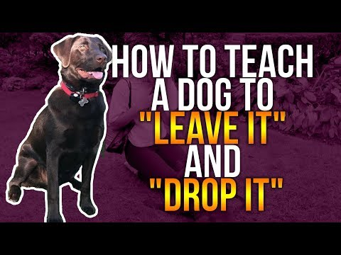 """HOW TO TEACH A DOG TO """"LEAVE IT"""" AND """"DROP IT"""""""