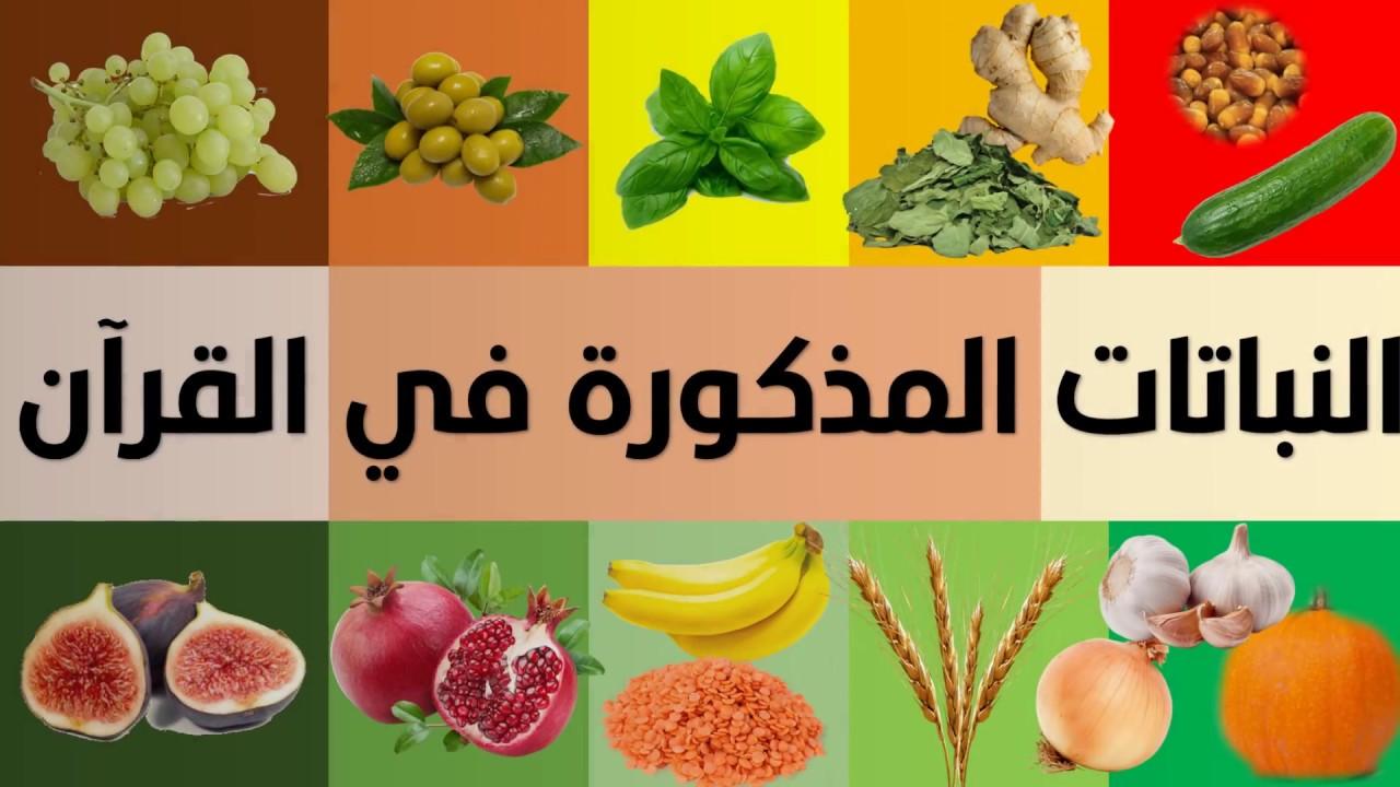 الفواكه الخضروات الأشجار الحبوب النباتات المذكورة في القرآن الكريم Youtube