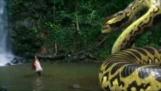 vuclip piranhaconda trailer