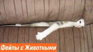 Новые Приколы с Котами Смешные Кошки Фейлы с Животными