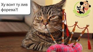 Сколько живут кошки? Что влияет на продолжительность жизни кошки?