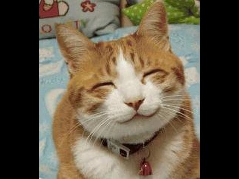 Image De Chat Rigolo le chat le plus marrant du monde !!! / - youtube