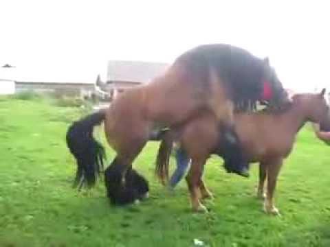 Как лошади занимаются спариванием видео