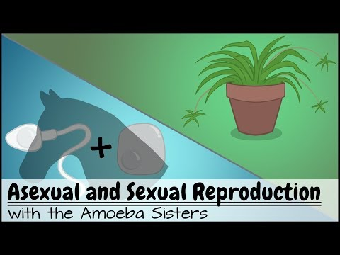 Biotopics asexual reproduction video